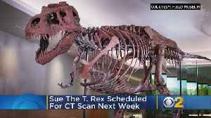 SUE The T. Rex Scheduled For CT Scan Next Week [Video]