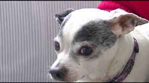 Furry Friends: This week's Furry Friends come from Caring Hearts in Upper Macungie Township [Video]