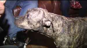VIDEO Carbon County man charged with 5 counts after stabbing dog in the neck [Video]
