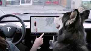 Tesla Comes Out With 'Dog Mode' And Cabin Overheat Protection [Video]