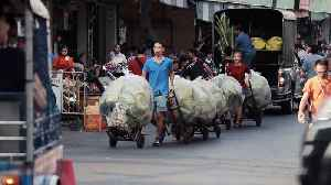 Flower Seller Has His Hands Full With Four Trolleys Of Green Lotus Leaves [Video]