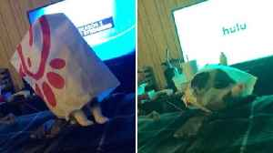 Cats not out of the bag – hilarious moment tabby falls off bed with a Chick-Fil-A bag on head [Video]