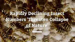 News video: Declining Insects Could Cause Declining Nature Overall