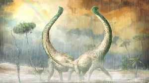 News video: Newly Discovered Dinosaur Had A Heart-Shaped Tail