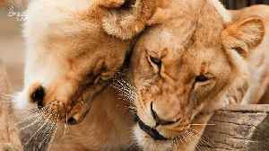 Do Animals Feel Love? Here's What Those Signs of Affection Really Mean [Video]