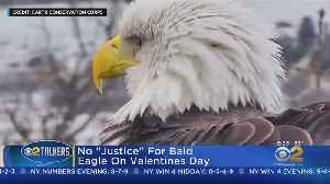 Trouble In Paradise For Love Birds [Video]