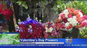 Downtown LA Flower Mart Buzzes With Valentine's Day Shoppers [Video]