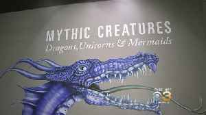 'Mythic Creatures: Dragons, Unicorns And Mermaids' Exhibit Coming To Academy Of Natural Sciences [Video]