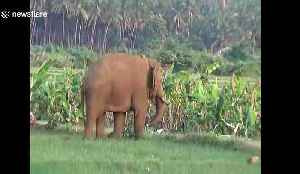 Wild and captive elephants baffle forest officials with their unlikely friendship [Video]