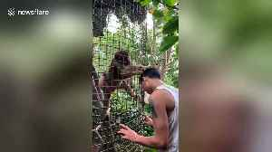 Helpful monkey tries to groom tourist's hair at wildlife park in China [Video]