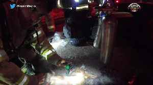 Firefighters revive dog using CPR [Video]