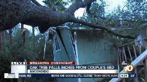 Couple escapes certain injury when tree falls on home [Video]