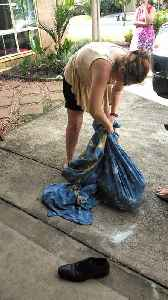 90 Pound Python Found in Laundry Room [Video]