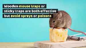 How to Get Mice Out of Your Ducts [Video]