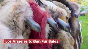 You Won't Be Buying Fur Coats In Los Angeles Or San Fran [Video]