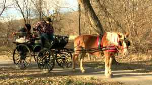 Valentine's Day Carriage Rides [Video]