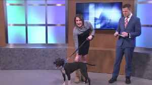 Becky the dog: Pet of the Week for February 15 [Video]