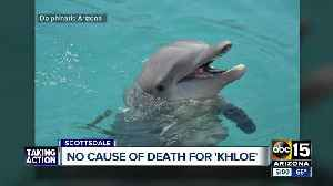 Necropsy report shows no information on how Khloe the dolphin died at Dolphinaris [Video]