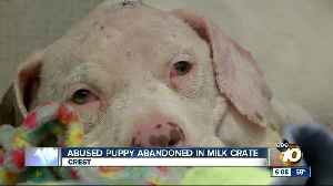 Abused puppy abandoned in milk crate [Video]