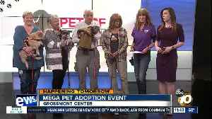 Pets of the Week: Neil, Bowser, Ben, Precious [Video]