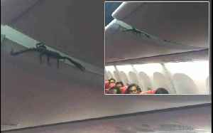 Passengers Find Live Scorpion On Plane [Video]