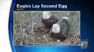 2nd Egg Of 2019 Laid In Hays Bald Eagle Nest [Video]