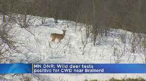 Chronic Wasting Disease Confirmed In Northern Minn. [Video]