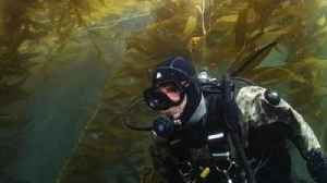San Diego's kelp forests keep a holdfast on coast, despite climate threats [Video]