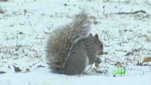 South Jersey Squirrel Hunting Competition Causes Controversy [Video]