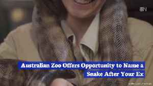 Contest: Why Does Your Ex Deserve To Be Related To A Snake? [Video]