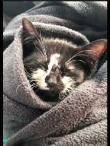 Defying all odds, kitten slowly recovers from head trauma [Video]