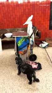 Man in subway station has a bunch of different animals with him [Video]