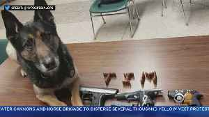 NYPD K-9 Sniffs Out Illegal Guns [Video]