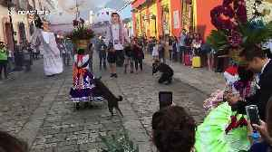 Dancing stray dog steals the show at Mexico festival [Video]