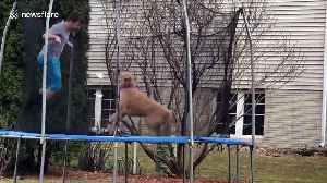 Iowa boy and his dog love jumping on the trampoline together [Video]