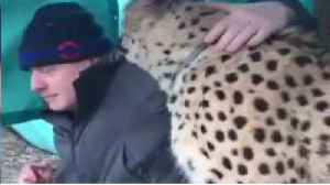 Raw Moment: Boris Johnson gets up close and personal with Saba the cheetah [Video]