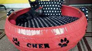 Animal lover creates beds for stray dogs and cats using discarded tyres [Video]