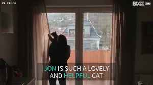 Meet Jon, the adorable cat who helps you close the curtains [Video]