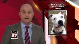 Ingham County Treasurers Office & Animal Control Taking Dog Licensing Enforcement Action [Video]