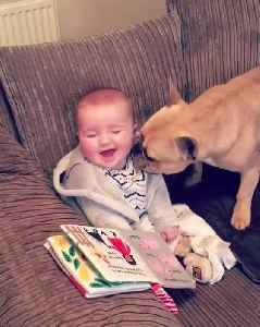 Toddler Giggles Adorably Whenever Tickled by French Bulldog [Video]