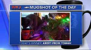 Mug shot of the day - Kristi from Tomah [Video]