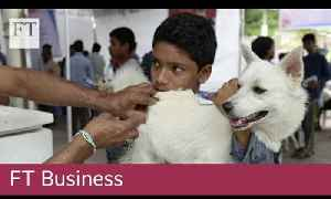 Barking up the right tree: canine food push in India [Video]