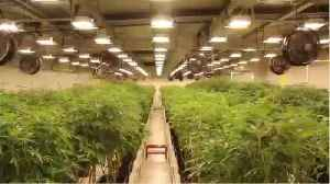 Why Pot Factories Are Exploding (Literally) [Video]
