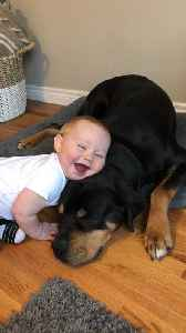 Dog and Little Boy are Best Buds [Video]