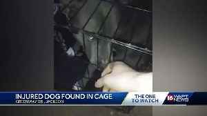 Wounded dog locked in cage, dumped on side of road [Video]