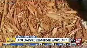 Pest control companies respond earlier than normal to termite swarms in Tampa Bay area [Video]
