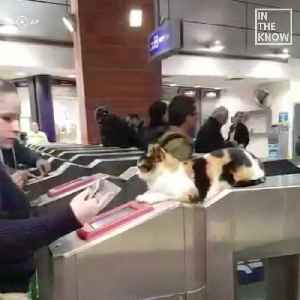This kitten greets passengers at an Israeli train station every day [Video]