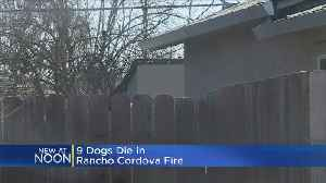 9 Dogs Found Dead After Shed Fire At Rancho Cordova Home [Video]