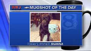Mug shot of the day - 2/19/19 - Shawna [Video]