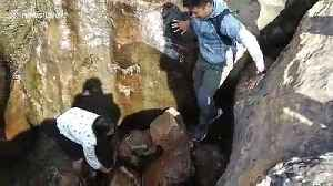 Passersby rescue injured calf from deep trench in rural India [Video]